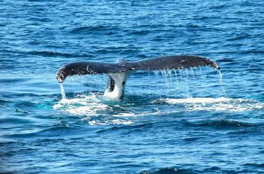 Image of Whale Watching